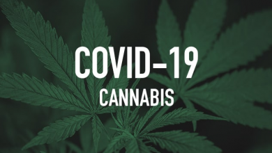 Photo of Marijuana, CBD Brand Names Sense Effects of COVID-19