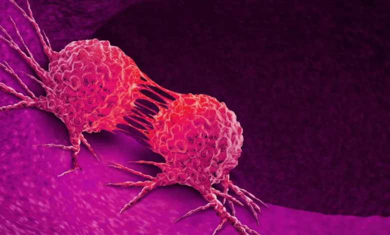 04cancer 780x470 - Comparable Mice, Different Instinct Bacterium, Different Amounts  Of Disease